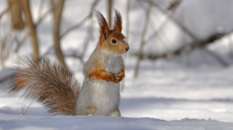 branches_snow_tail_winter_squirrel_85368_2560x1440